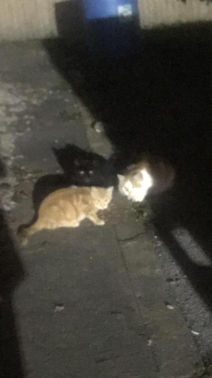 3 kitties I fed behind a gas station Source: Maggiemay3733 on catpictures. #cats#cute cats#cat#aww