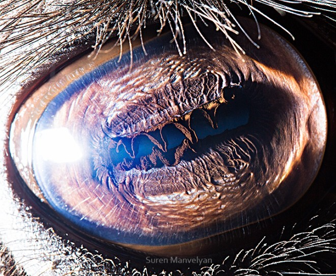 (via Macro Eye Photos Zoom in on Nature's Complexity | Raw File | Wired.com)