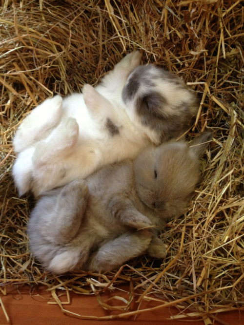 wabbitz:  this is how my bf and I sleep We definitely don't look this cute though