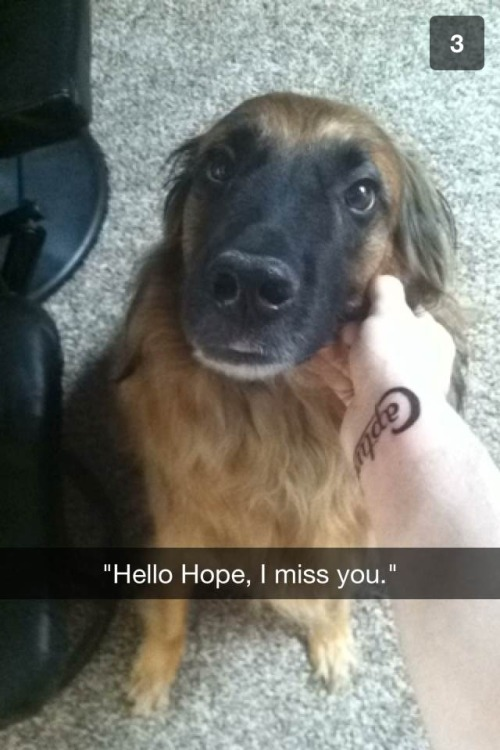 Dog snaps are the best snaps