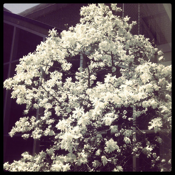 No one told me the #trees were #blooming. I love #spring