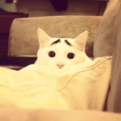 buzzfeedanimals:  obsessed with this cat.