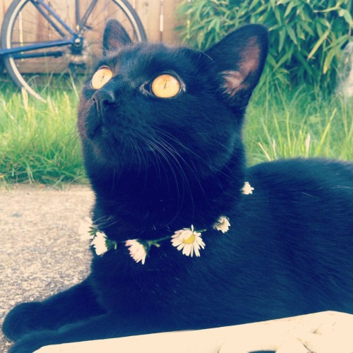 ffemmefatalee:  jewjoy:  My cat is beautiful   Salem?!