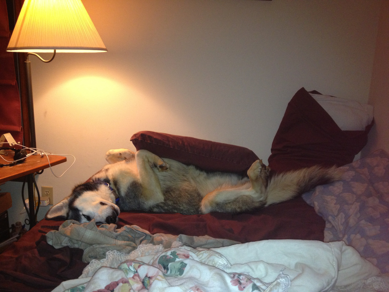 Shasta is not good at pillows.