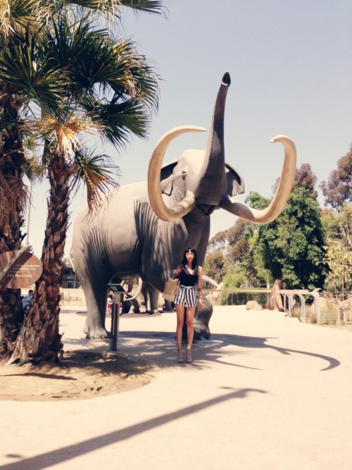 le-francium:  Perfect day at the zoo. Taken by Elan.