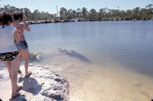 Women view an alligator up close at Blue Hole, 1978 via