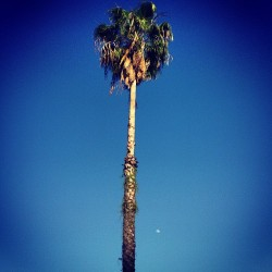 Gorgeous afternoon. #moon #sky #tree http://bit.ly/16M09gj
