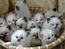 Basket of kitties http://weheartit.com/entry/57802752/via/Lavenderlatim