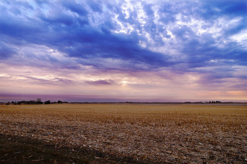 Corn Field by lfviolin on Flickr.