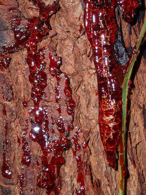 vegan-patisserie:  Bloodwood sap (heals injuries)