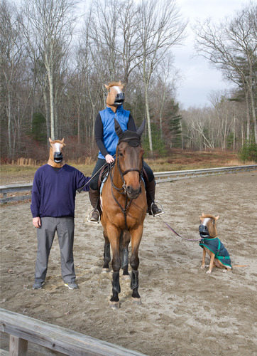 testifiedgodhead:  wowjustloveme:  meladoodle:  you came to the wrong neigh-bourhood, motherfucker  THE FUCKING DOG I CANT BREAHE  what dog? thats a horse.