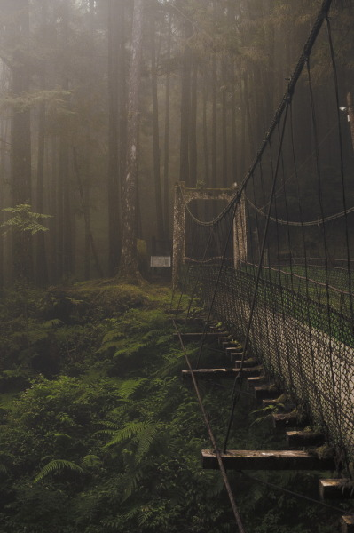 Forest Bridge By -kent-