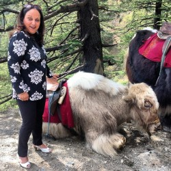 Who's cuter? Pretty lady with a yak. #yak #nature #shimla #fashion #style #shoes #heels #fur #animal #mountain #tree #green #black #leggings #smile #pose #beautiful #cute  (at Kufri Holiday Resort)
