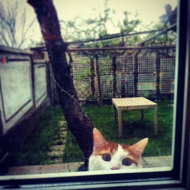 #cat #pamuk