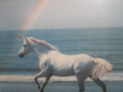 (via animal, fantasy, horse, magic - inspiring picture on Favim.com)