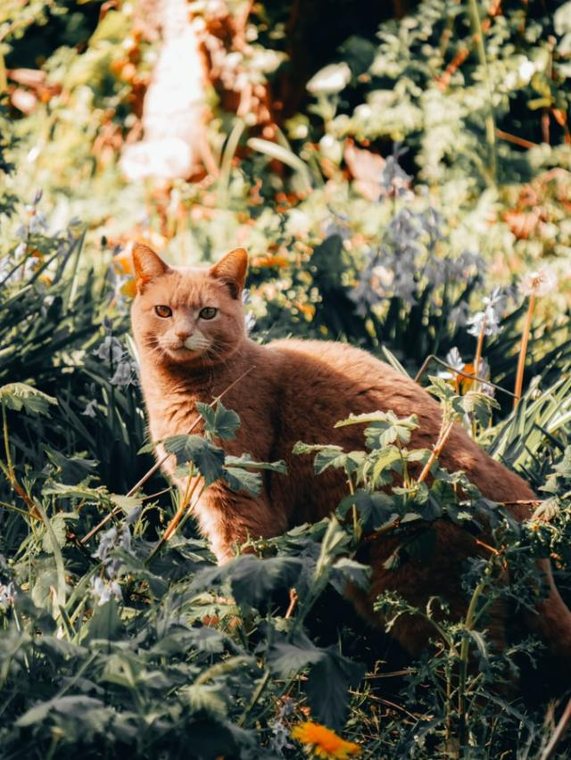 Matt Seymour [1] [2] #warrior cats#warriors#cat photography#one cat#ginger tabby#heterochromia#field
