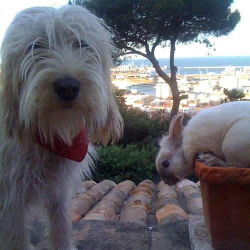 "Dog and Bunny Vacation in the South of France Reynard the bunny and Cody the dog have long dreamed of going to France. So when the two pals from Portland, ME saw a Groupon for a five-day tour from Avignon to Nice, they had to jump on it. ""Rey and Cody always wanted to go to Europe, specifically France, where Rey has family,"" explained Todd Garlinghouse, who walks Cody on Thursdays. ""They just didn't have the money, plus all that planning is stressful. The Groupon was a great deal and really perfect for what they wanted to do."" The two return on Thursday and have been sending back loads of Instagrams of their adventures. Via iloul."