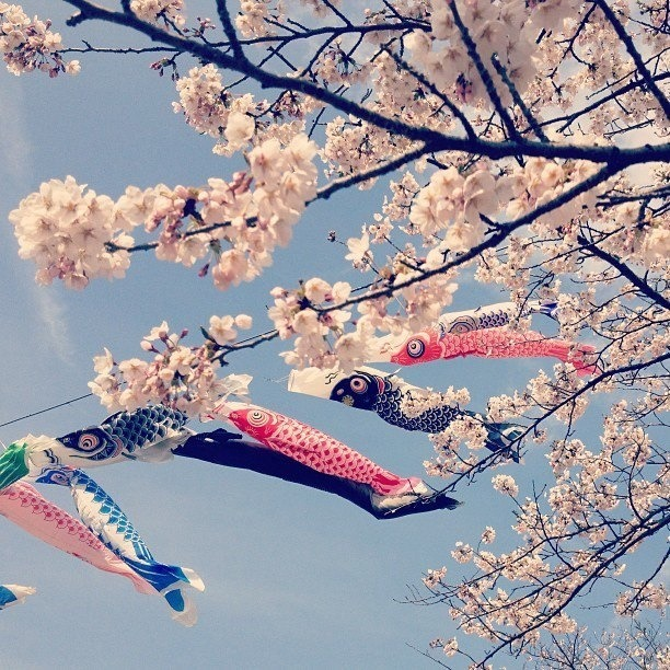Springtime..  Photo by Mina Kotsugai.