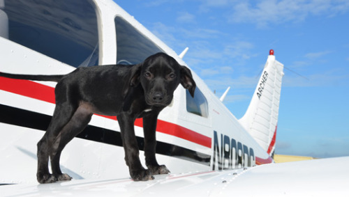Fly me away: Pilots, volunteers unite to rescue animals      Pilots N Paws has transported thousands of rescue animals, often flying them hundreds of miles from where they were found so they can find forever homes.