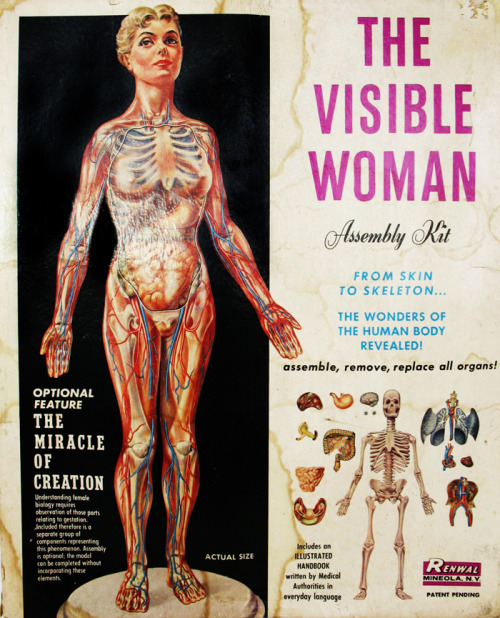 The Visible Woman anatomical assembly kit c. 1960