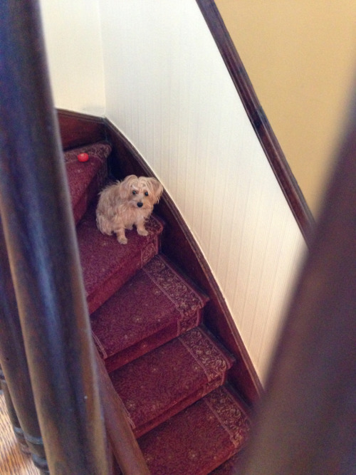 My fave spot in the new house: Standing watch on the stairwell.