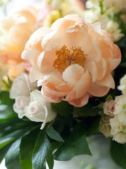 foxontherun:  (via Peach Peonies)