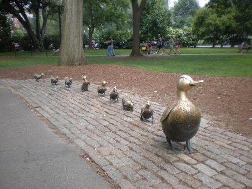 thepreppyyogini:  Boston Public Gardens' famous Make Way for Ducklings line.