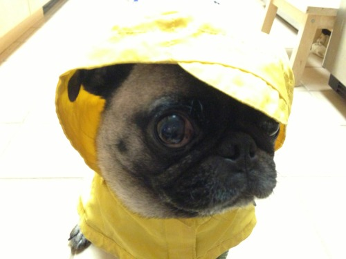 imstellapug:  Are you talkin to me?