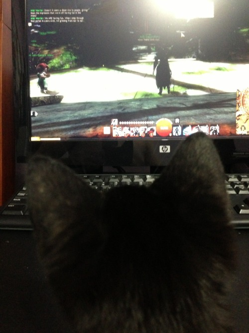 "weirdfolio:  whitecharr:  themasksalesman:  She's watching me play Guild Wars 2! Lol  And wondering why you're not playing a charr designed after her! :)   Every cat should have her own charr in guild wars 2  First thought: ""In Guild Wars 2, nobody know you're a cat!"""