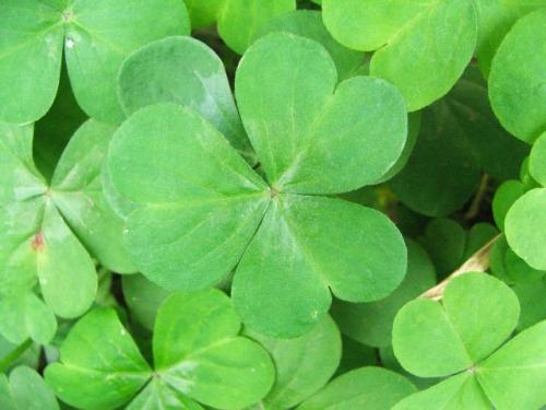 From Our Readers: DIY MAKE YOUR OWN LUCKby From Our Readers  http://bit.ly/UZ9Ikl