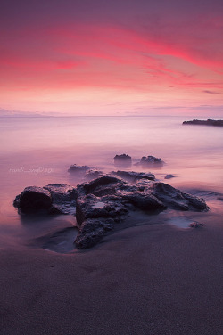 Magenta by Randi Ang on Flickr.