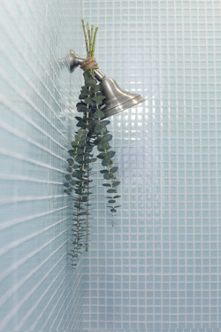 "softmints:  ""Hang the eucalyptus upside down by tying it to your shower head with twine. When you run your shower, the steam will rise up towards the eucalyptus, filling your bathroom with the most refreshing, relaxing scent. Plus, the added greens are lovely on the eyes. You'll definitely feel a little closer to nature."""