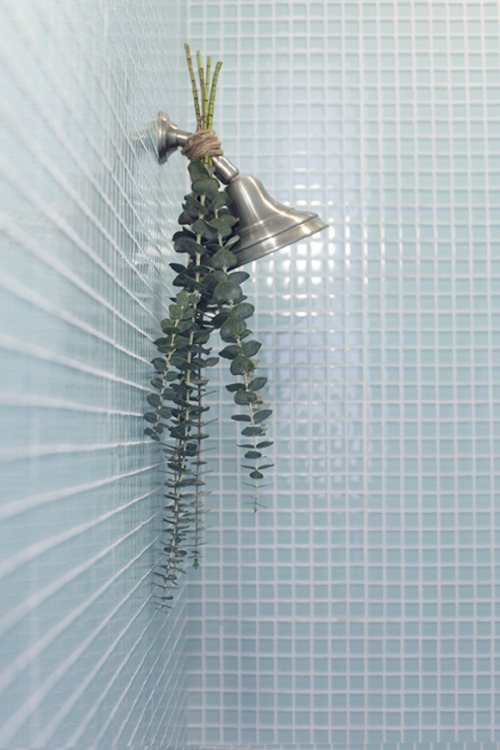 "queenbliss:  ""Hang the eucalyptus upside down by tying it to your shower head with twine. When you run your shower, the steam will rise up towards the eucalyptus, filling your bathroom with the most refreshing, relaxing scent. Plus, the added greens are lovely on the eyes. You'll definitely feel a little closer to nature.""  This also works with other woody herbs like lavender, some mints, and rosemary.  Just make sure you only leave them there for a day or that lovely herbal smell will be replaced with some pretty gross ones."