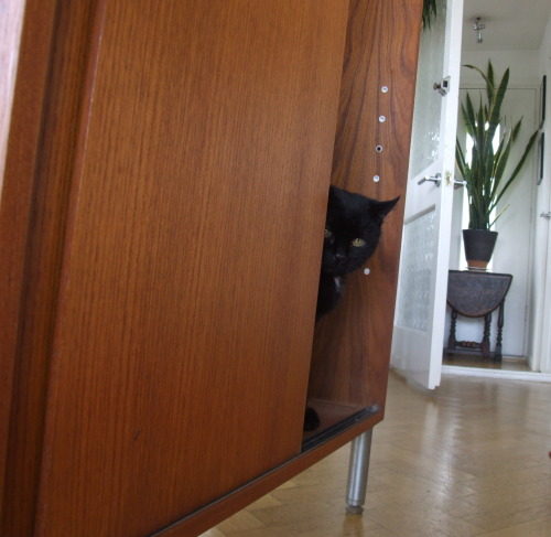 whymycatissad:  My cat is sad because he is watching you from a cupboard, wondering what precisely your childhood trauma happens to be.  OMFG