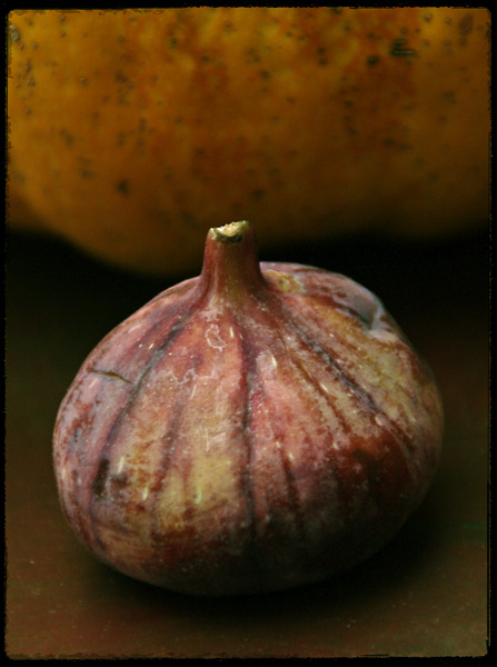 Fig & Pumpkin