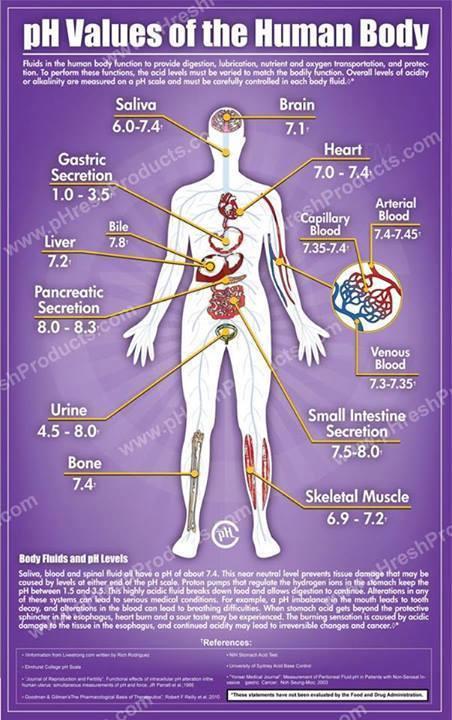 Body purification
