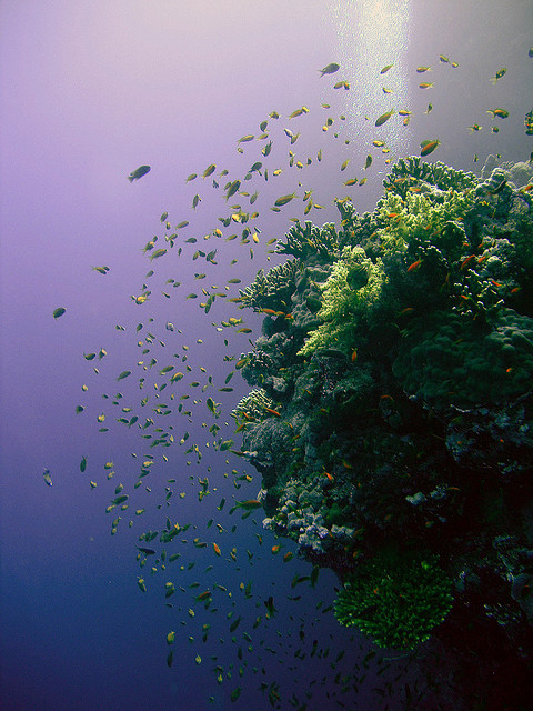 wax0nwaxoff:  Coral reef by Nokia 1