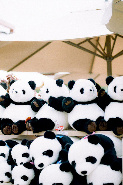 ileftmyheartintokyo:  Panda by tobimaru on Flickr.
