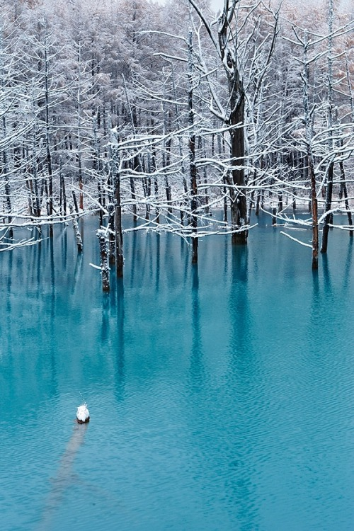 japanmylove:  Blue Pond in November, Biei, Hokkaido, Japan  Places like this can exist o.O