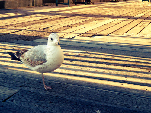 Chillin' with my seagull friend.