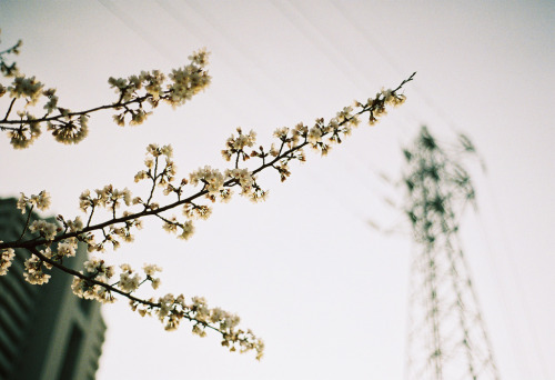 HV (by ozuma. on flickr).