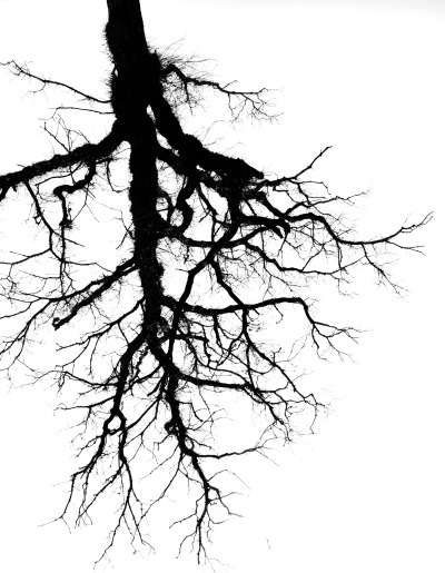 charles-pictures:  Tree, lung, vein, thunder.. it's still the same idea