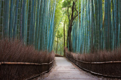 dr-beakman:  Bamboo Forest, Japan. (via one big photo)