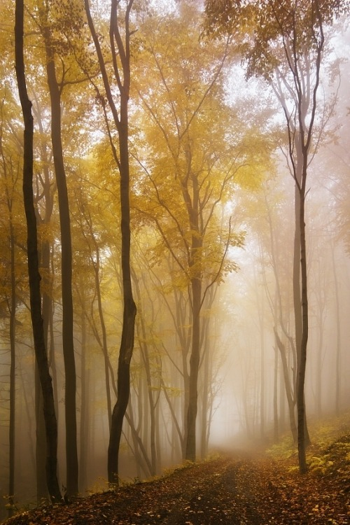 woodendreams:  (by Daniel Řeřicha)  Dobry