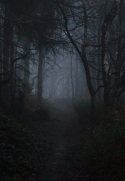 scary tree trees dark nature forest darkness goth gothic fog dark forest Paganism wiccan gloomy pagan wicca viking norwegian dark blog skandinavia dark beauty gothic beauty gothic blog