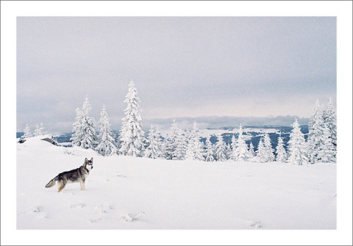 This is my 7 months old Alaskan Malamute, happy he can run free while we where ski-touring. Shot on film with a Revueflex AC2.
