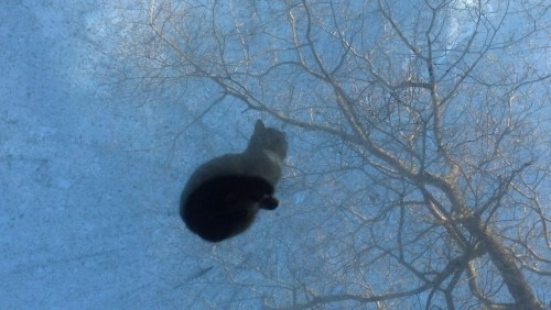 Cat on a cold glass roof