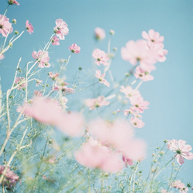 ileftmyheartintokyo:  c o s m o s . by shima. on Flickr.