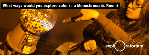 exploratorium:  The Exploratorium's new Monochromatic room is a full-body immersive exhibit lit by monochromatic light from sodium vapor lamps. With only a single color of light to absorb or reflect, objects in this room look to be more or less the same yellowish/sepia color. Flashlights allow visitors to explore the hidden colors around them.