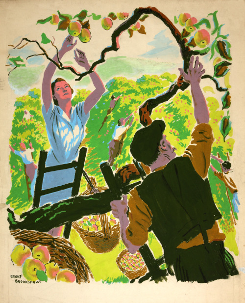 Apple Picking (1939-46), Drake Brookshaw. Collections of the National Archives (United Kingdom).
